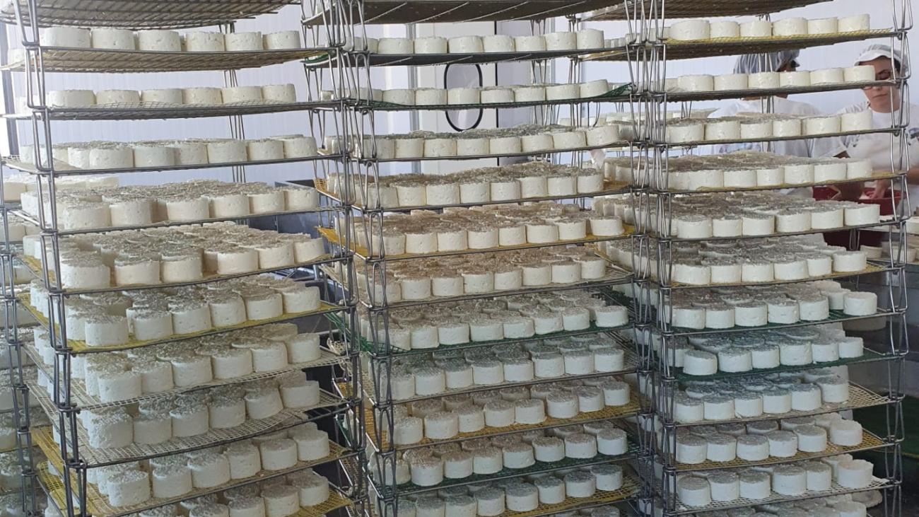 queijo-de-ovelha-do-monte-do-ganhao